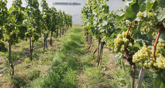 Great Summer White Wines